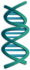 A DNA strand. Names Url.com - DNA, Genealogy & Ancestry,  - Premium, Generic Top Level Domain Name For Sale.